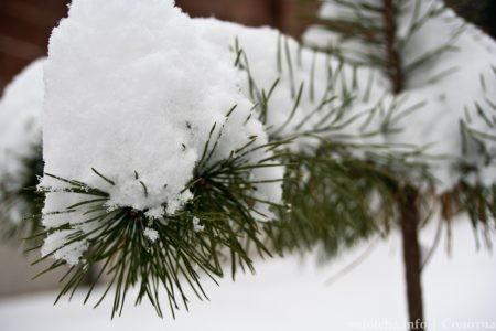 snegopad-solotcha